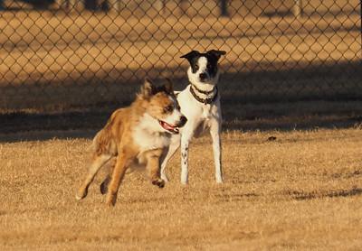 Dog Park 11-23-14