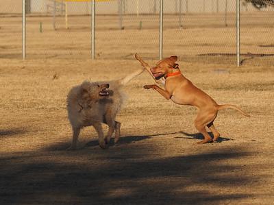 Dog Park 11-30-14