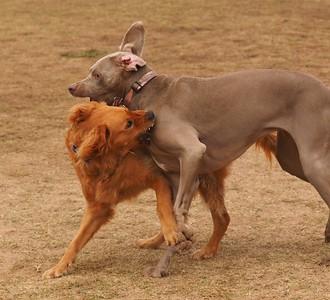 Dog Park 11-7-15