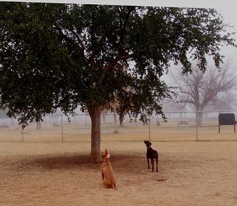Dog Park 12-20-14