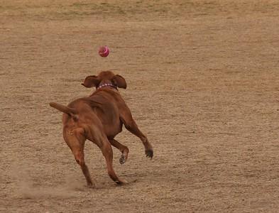Dog Park 12-21-14