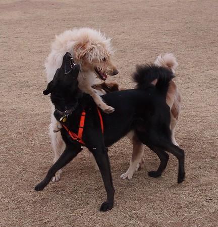 Dog Park 12-27-14