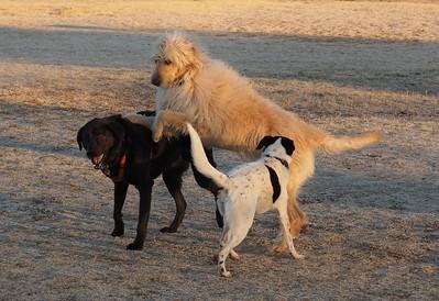 Dog Park 12-28-14