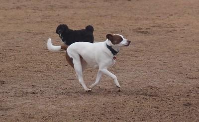 Dog Park 2-1-15
