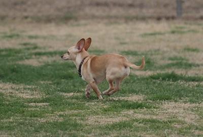 Dog Park 2-22-15