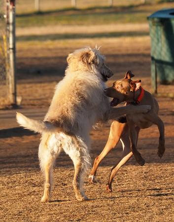 Dog Park 2-7-15