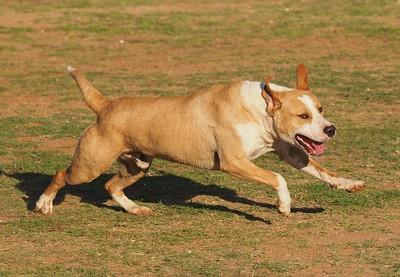 Dog Park 4-26-15