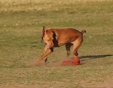Dog Park 5-2-15