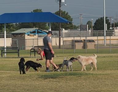 Dog Park 7-11-15
