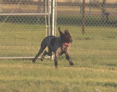 Dog Park 7-26-15