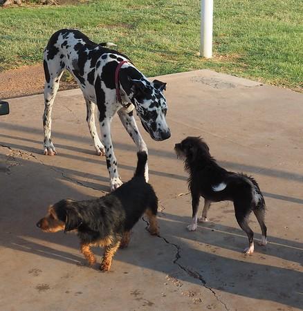 Dog Park 8-15-15