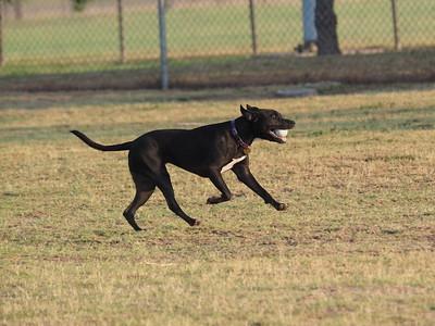 Dog Park 8-16-15