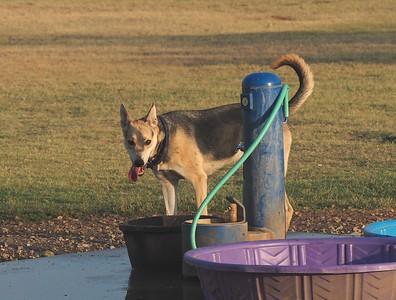 Dog Park 8-2-15