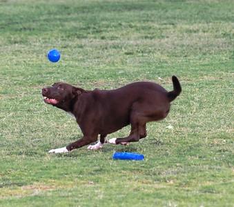 Dog Park 9-13-15