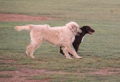 Dog Park 9-27-15