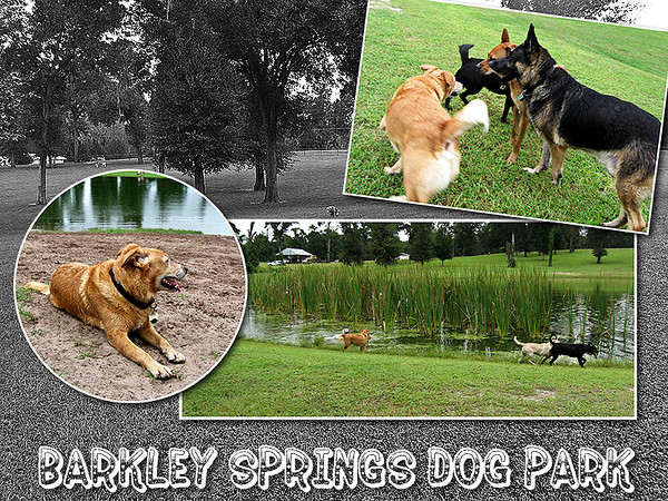Barkley Springs Dog Park