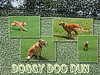 Doggy Doo Run