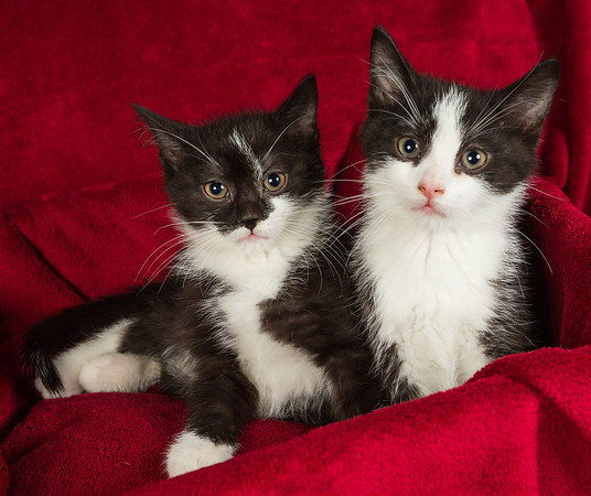 These little charmers are available for adoption through the Exeter Animal Hospital. The sister (left) and brother (right) are very sweet, cuddly babies with personality to spare! Accustomed to dogs and being handled. If interested call 519-235-2662.