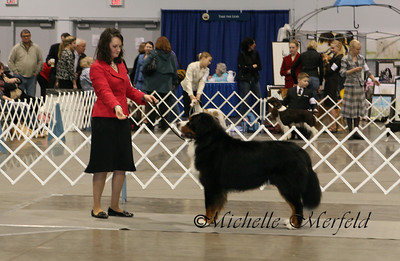 Sherman finishing his championship in Portland, shown by Stacy Slade, in January.  Sherman is owned by Pat Hole.