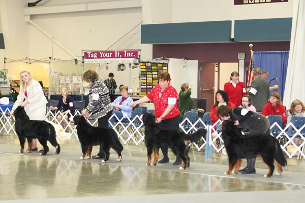 Dog Shows