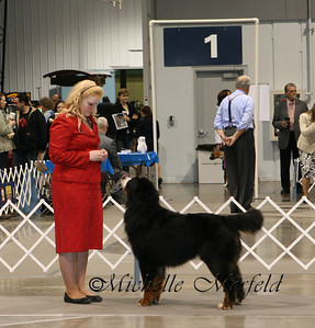 Angela showing Harley (Ch Adesa's Up For A Ride) in Portland in Junior Showmanship.  January 2011.