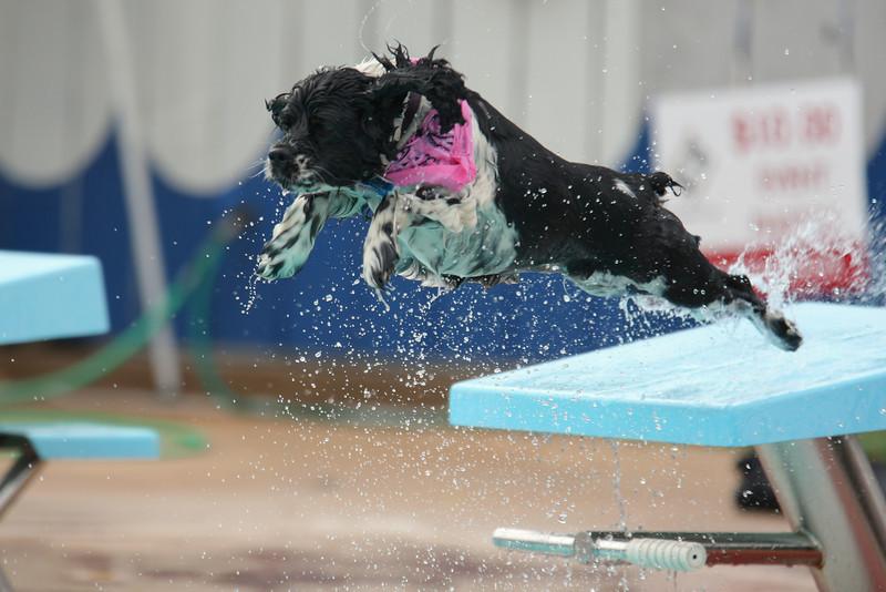 Women's Platform Diving Gold Medalist
