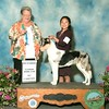 Rose (Wild Wind's Run For the Roses) as a puppy winning Best of Winners, 8/19/2017, handled superbly by Jade