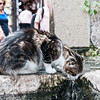 cat at a fountain