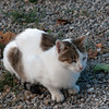 cat in Penedes