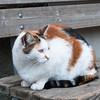 cat in Monorola / Cinque Terre, Italy
