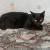 Cat in Santorini