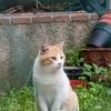 cat in Bolgheri