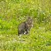 cat in the botanical garden