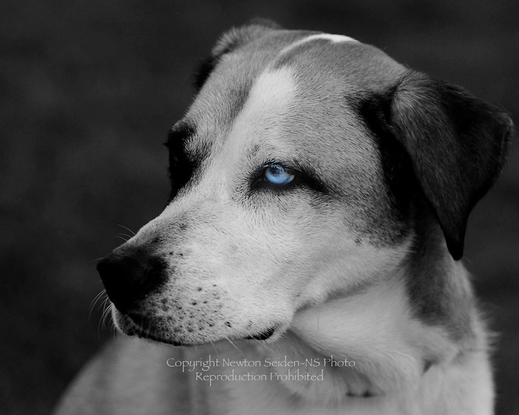 Old Blue Eye