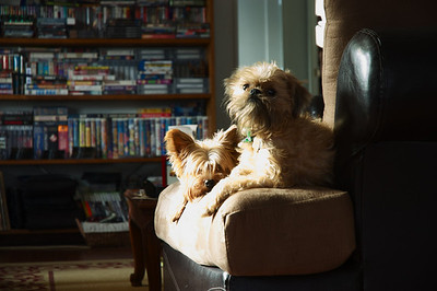 dogs, animals, sunlight, artsy, January 28,