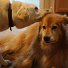 Ear kisses! We love each other.