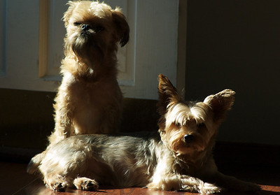 Dogs sitting in the sun