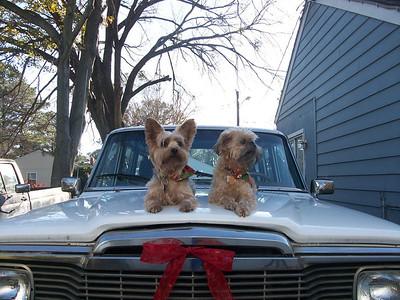 Dogs Ona Jeep