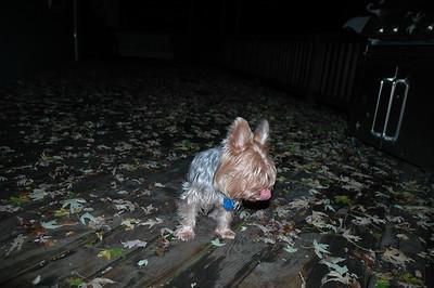 Dogs Outside November 15th