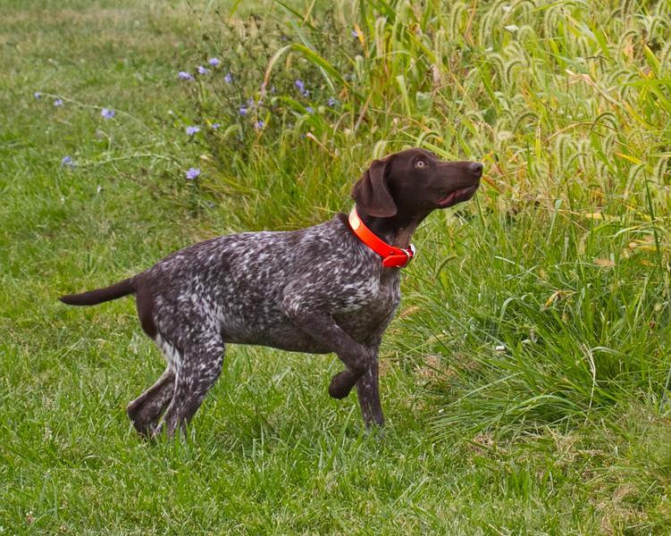Dee in training September 2014-13 (1 of 1)