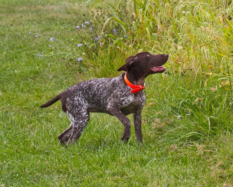 Dee in training September 2014-14 (1 of 1)
