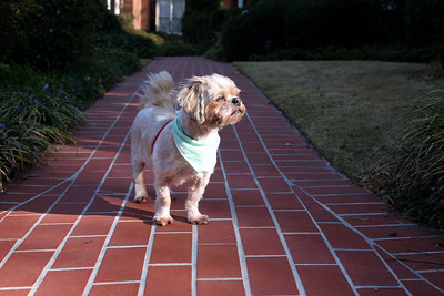 Max on brick walk