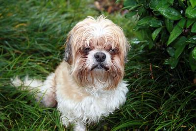 Max in rain