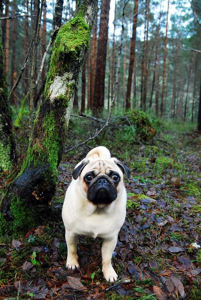 På skogstur..