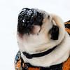 Litt snø i ansiktet er berre lekkert..