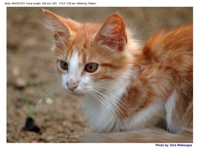 1120_poes_004