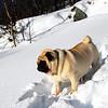 Litt for mykje snø etter Stanley sin kropp..