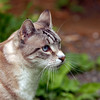 Litle Puma..