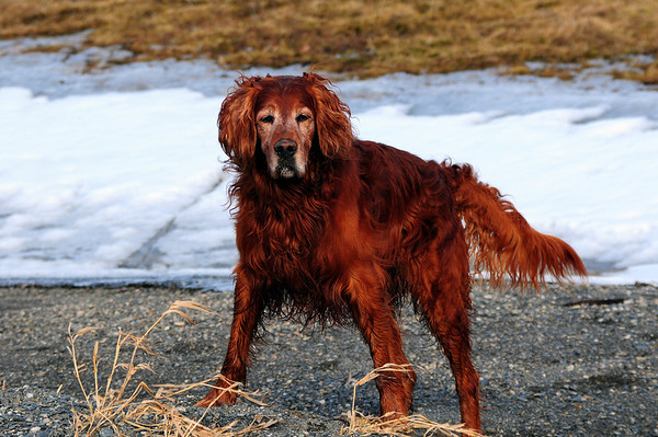 "My dog named ""hunting tuck"".."