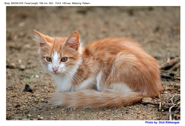 1120_poes_005